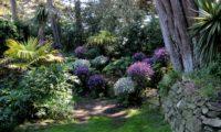 canteiro com composição mista de pássaras ou gerânios-da-madeira brancos e rosa-magenta - Geranium maderense