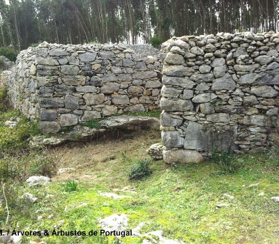 Muros de pedra-solta
