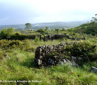 Vista parcial em 2004 da fazenda