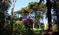 pássaras ou gerânio-da-madeira entre a verdura do Jardim Georges Delaselle - Geranium maderense